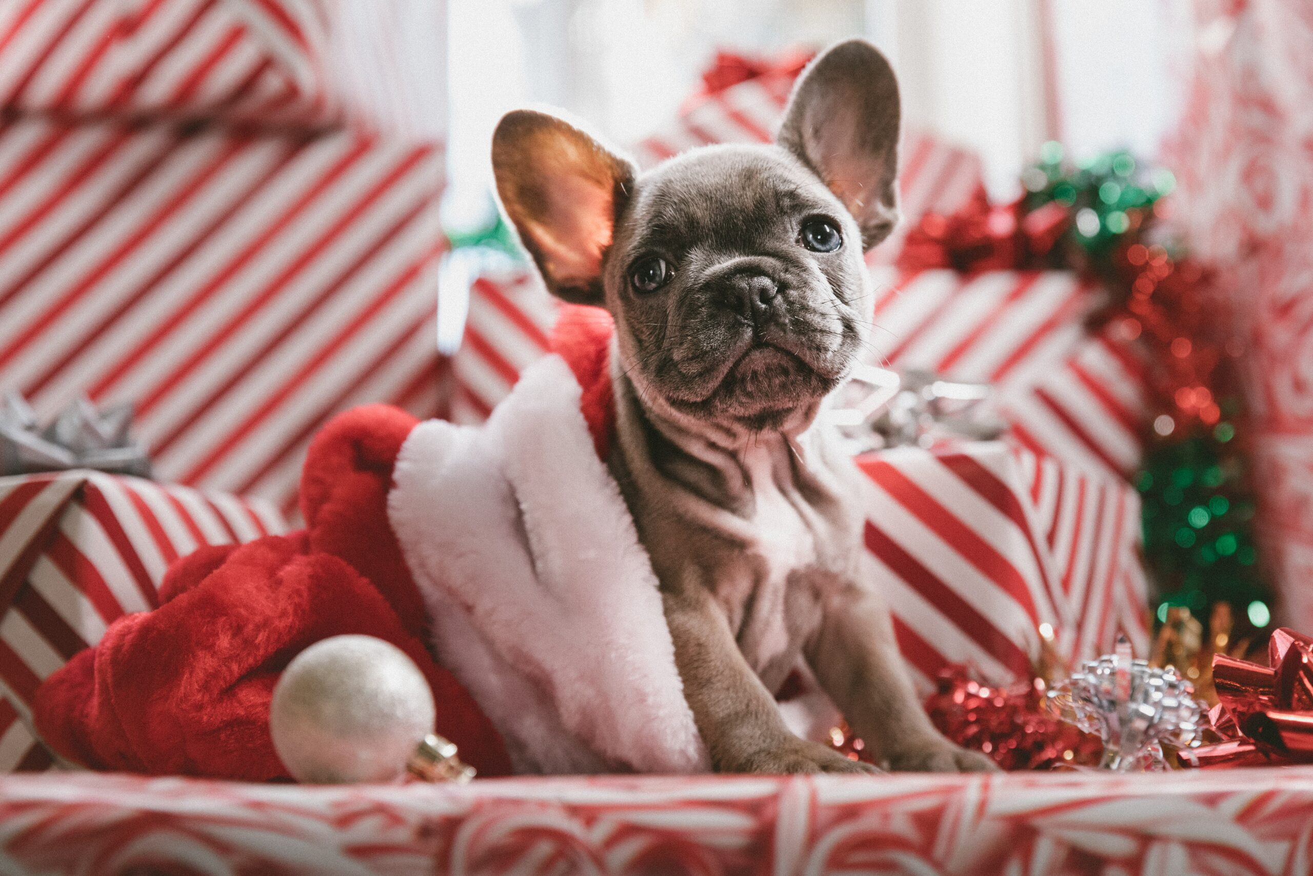 PETINTOWN: idee regalo da fare al tuo pet