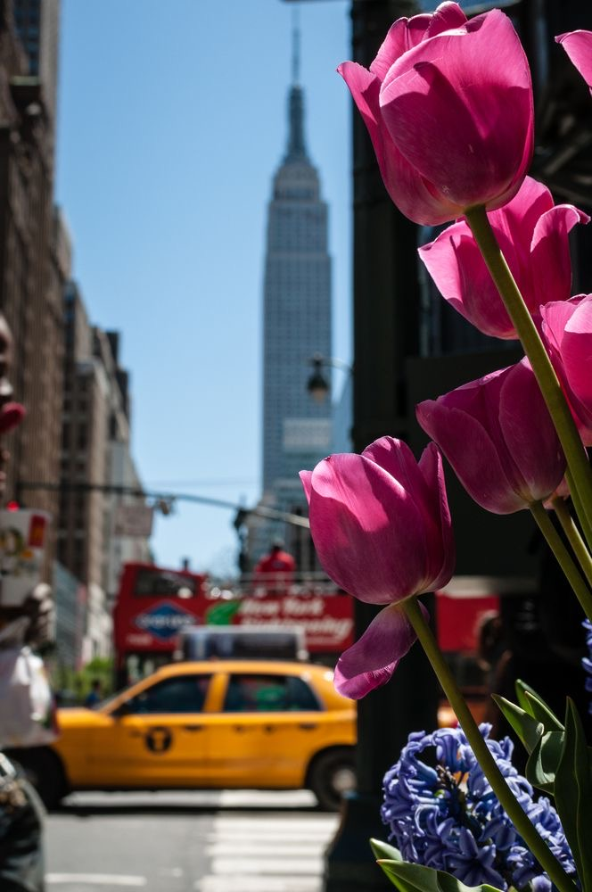 Springtime in New York – a sign of rebirth