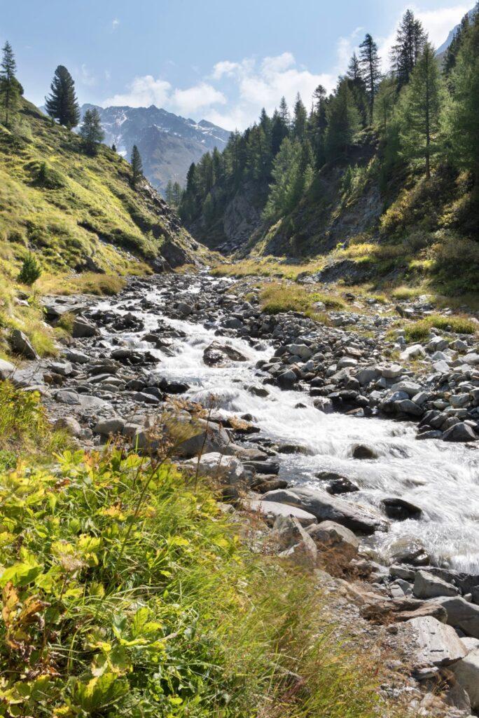La natura alpina in tutto il suo splendore: un ruscello si snoda a fondo valle tra pini e prati verdi