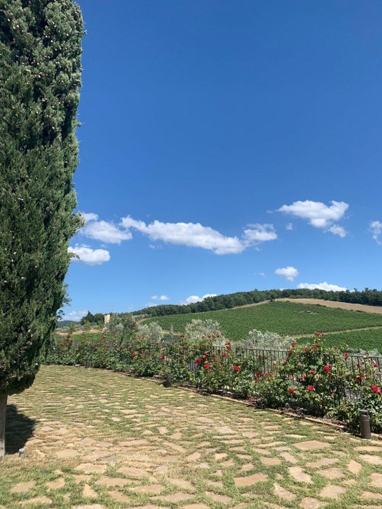 Dalla Tenuta Casenuove si ammira un tipico panorama del chianti: colline, vigneti e rose