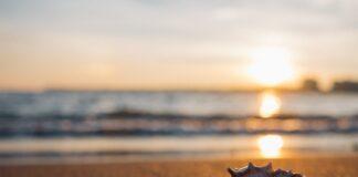 Un tramonto sulla spiaggia in compagnia di una conchiglia